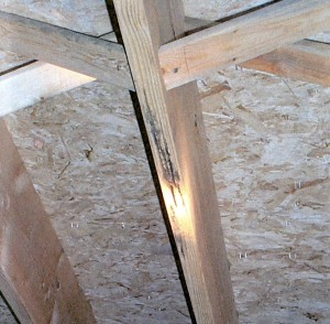 Mold on Framing Lumber 2